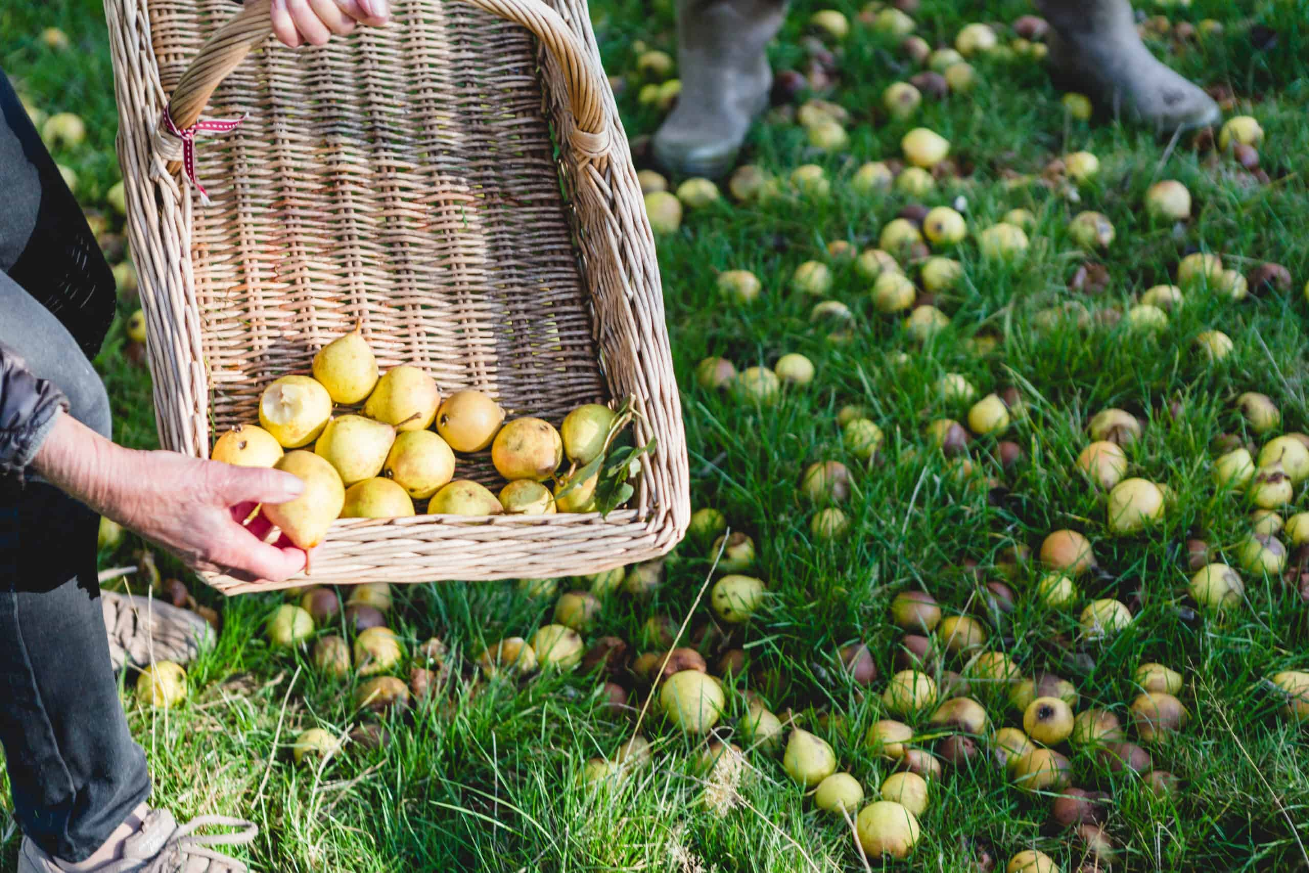 Locally picked fruit from the orchards